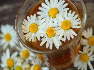 Chamomile For Weak Hair