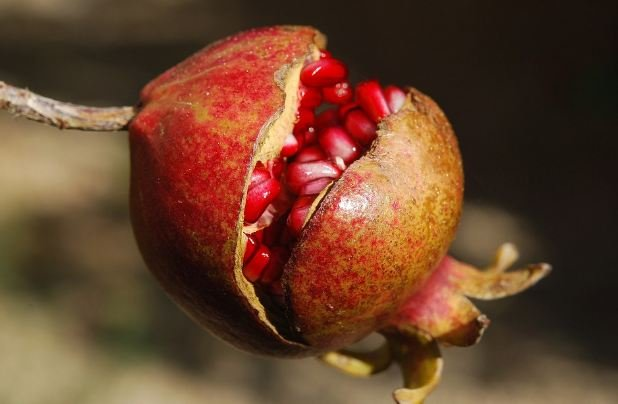 Pomegranate juice is also indicated for anemia