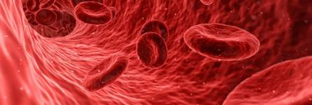 Red blood cells in the arteries