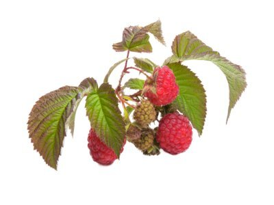 Red Raspberry and Leaf