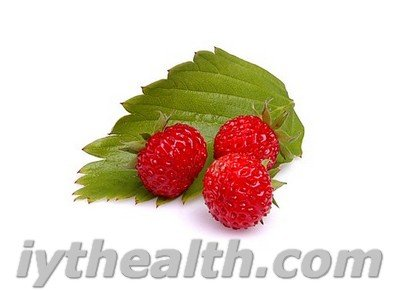Berries and leaves of wild strawberry