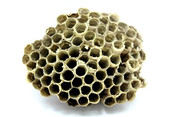 bee honeycombs