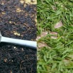 Difference between Black Tea and Green Tea