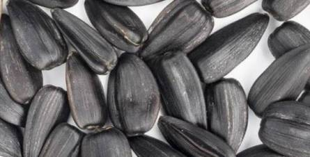 Sunflower seeds during pregnancy