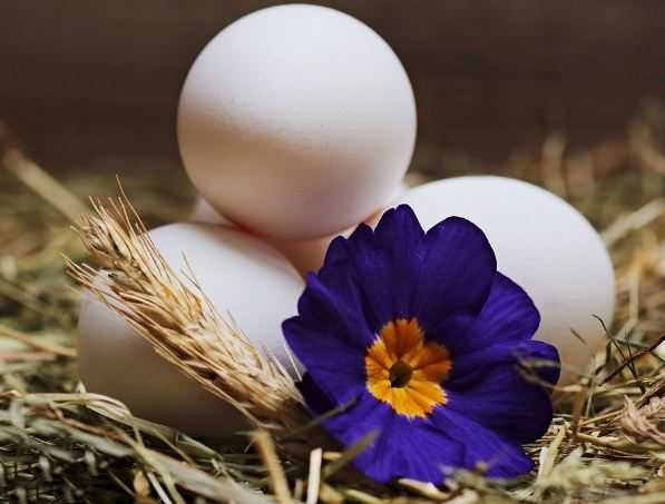 Three eggs and flower