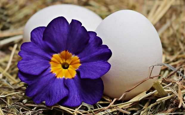 Two eggs and flower
