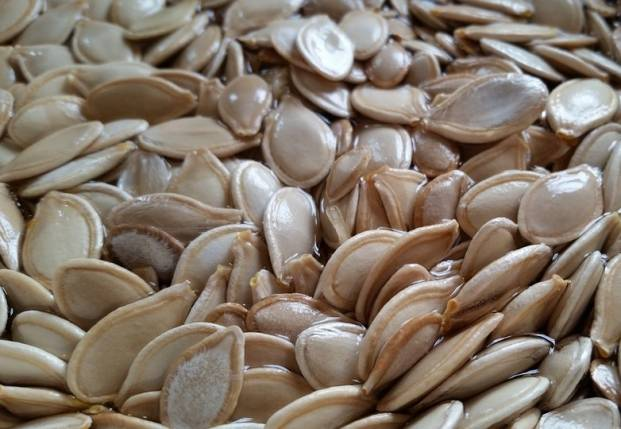 Pumpkin seeds are untreated