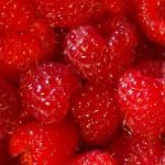 Juicy raspberry