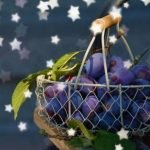Plums useful at night