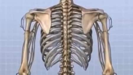 pain in the spine between the shoulder blades