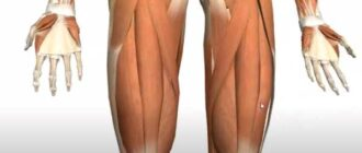 How to Get Thicker Legs