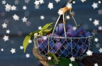 Is it Bad to Eat Fruit at Night?