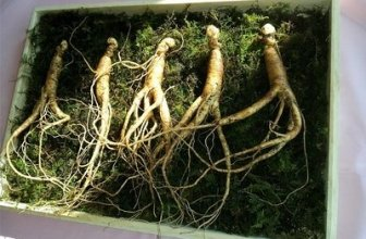 Ginseng Benefits and Side Effects